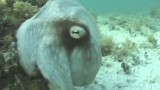 Science Friday: Octopus Camouflage!