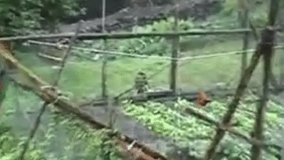 Clever Japanese Farmer: Keeping crows out of the vegetable patch