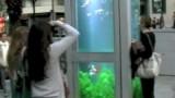 Phone Booth Aquariums (Evasion Urbaine)
