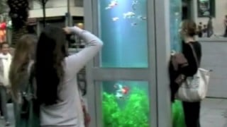 Phone Booth Aquariums (Evasion Urbaine)