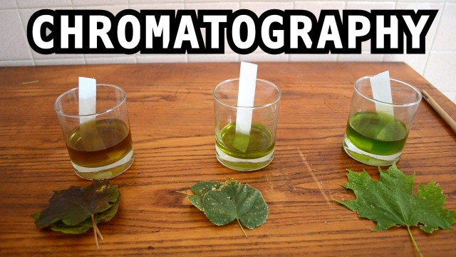 Easy Experiment: Leaf Color Chromatography
