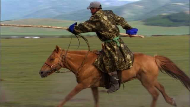 Mongolian horsemen herd wild horses for their horse milk