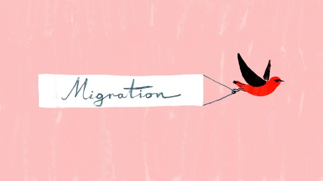TED Ed: Bird migration, a perilous journey