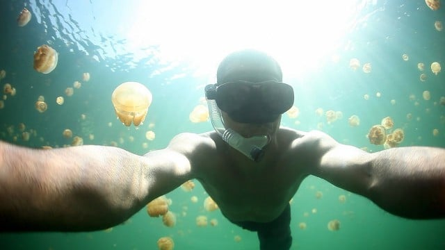 An underwater photographer swims in Palau's Jellyfish Lake
