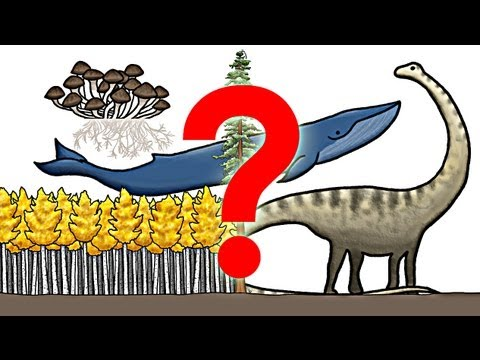 What is the Biggest Organism on Earth?