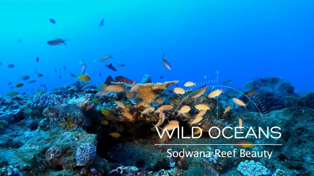 Wild Oceans: Coral Reef In Technicolor