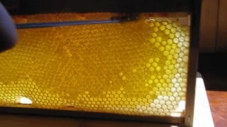 Cutting and bottling honey