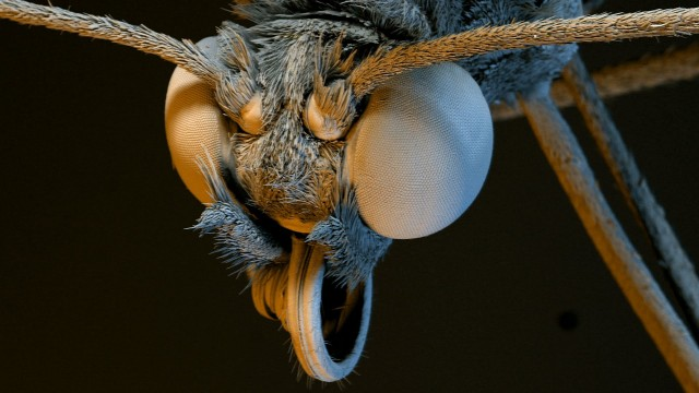 Plants and Insects Magnified Thousands of Times