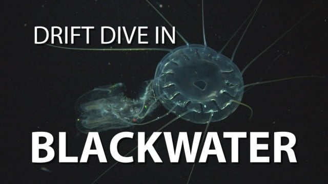 UnderH2O: Blackwater Drift Dive