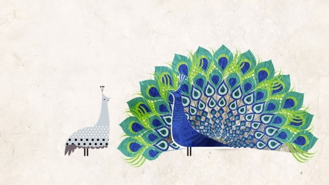 TED Ed: How did feathers evolve?