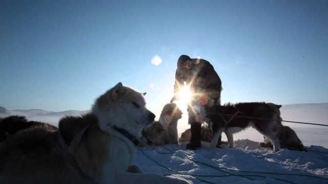 Travel through Greenland on a dog sled
