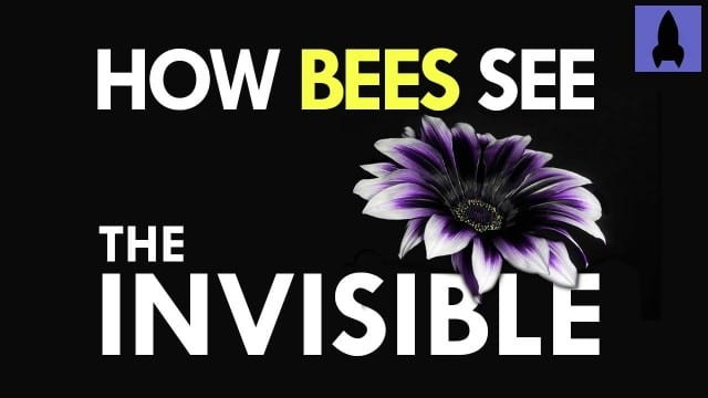 It's Okay to Be Smart: How Bees See the Invisible