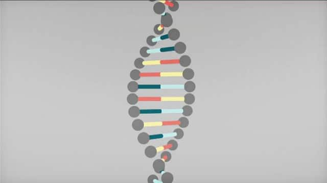 BBC Knowledge Explainer: DNA