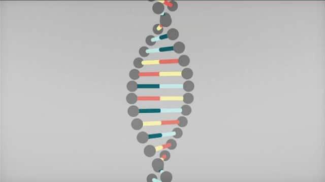 BBC Knowledge Explainer: DNA
