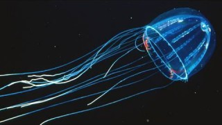 KQED Quest: Amazing Jellies