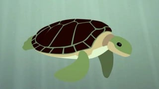 TED Ed: The Survival of the Sea Turtle