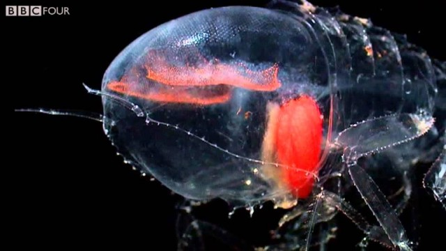 BBC's Nature's Microworlds: a preview of The Deep Sea