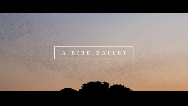 A Bird Ballet: A murmuration of starlings over Marseille, France