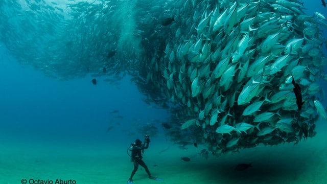 Fish Tornado: a behind-the-scenes look at the famous photograph