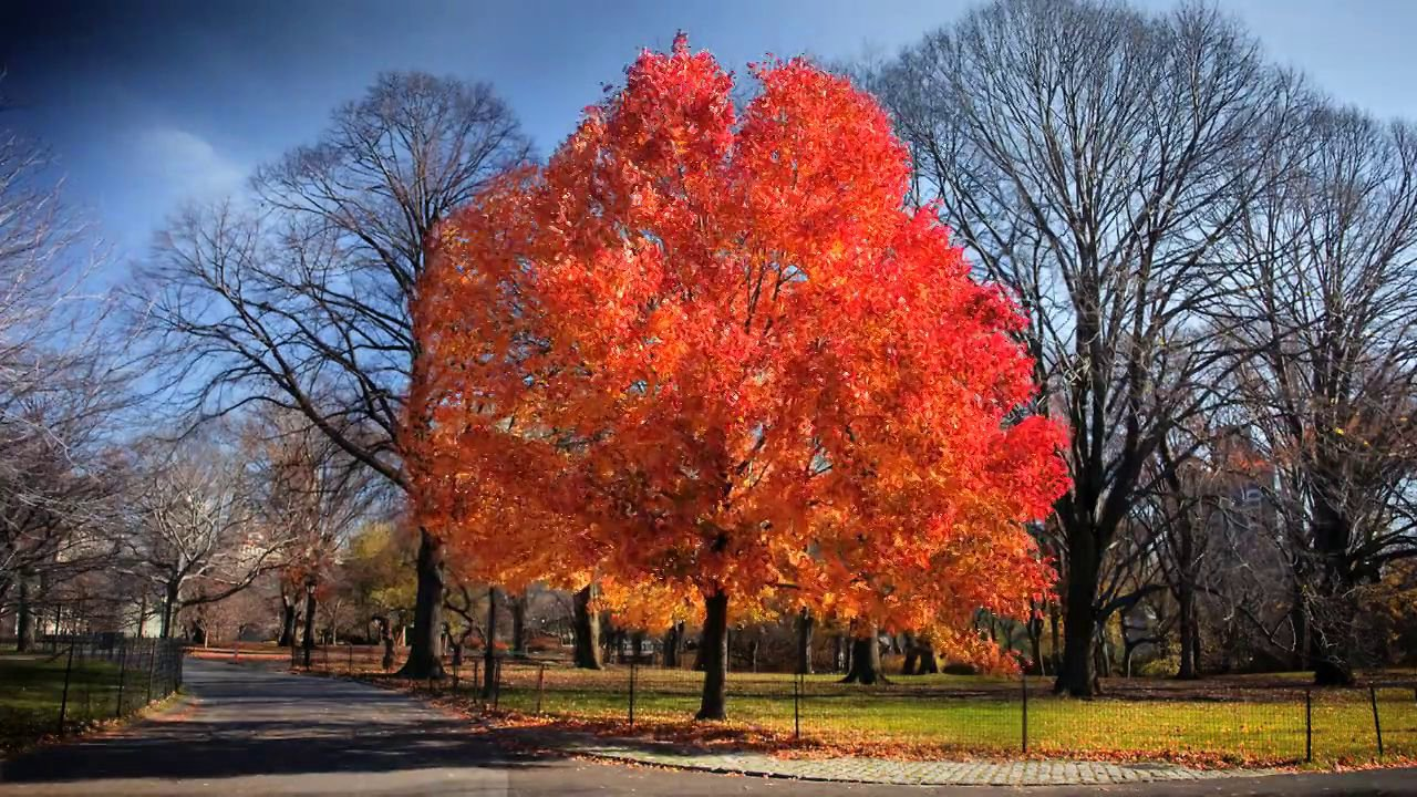 fall time lapse in central park the kid should see this. Black Bedroom Furniture Sets. Home Design Ideas