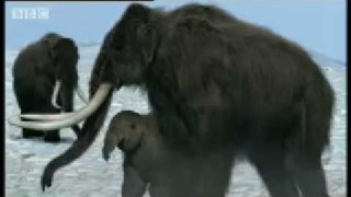 The life and evolution of the Woolly Mammoth