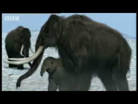 The Life of the Woolly Mammoth