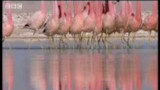 """Wild South America: volcanoes from up high and """"dancing"""" Flamingos"""