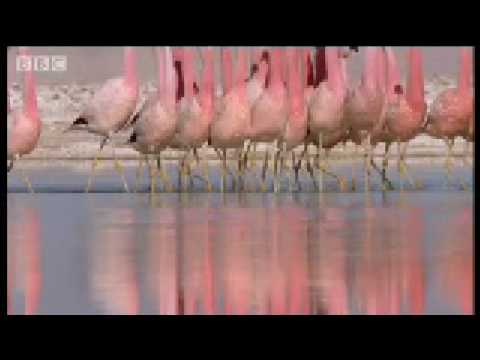 "Wild South America: volcanoes from up high and ""dancing"" Flamingos"
