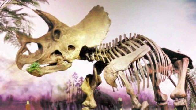 Triceratops vs Torosaurus