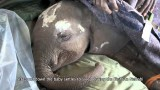The Sheldrick Wildlife Trust: Kinango's Story