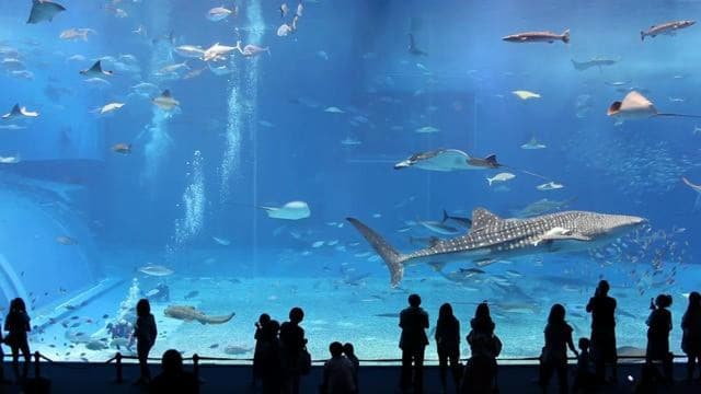 Kuroshio Sea – 2nd largest aquarium tank in the world
