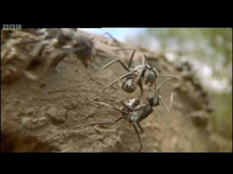 Life in the Undergrowth: Ant life in the Australian mangroves