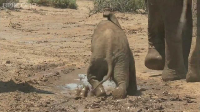 Learning to be an elephant in Samburu