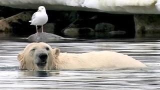 Polar Bear Handstand