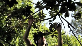 Diego Stocco: Music from a Tree