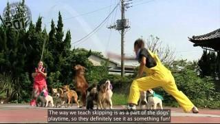 Uchida Geinousha's Super Wan Wan Circus: 13 dogs jumping rope