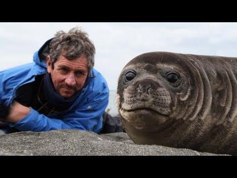 Charlie Bird meets some cuddly seals