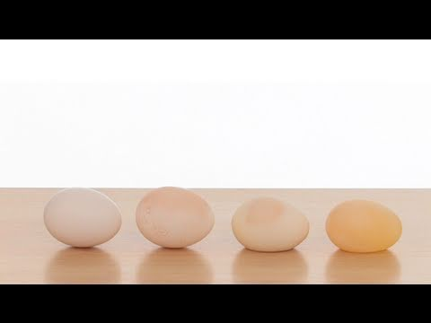 Sick Science! Naked Egg experiment