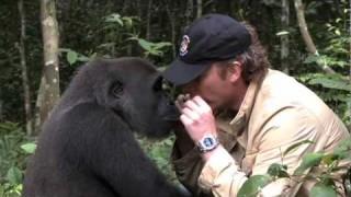 Damian Aspinall's reunion with wild gorilla, Kwibi