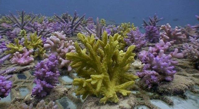 BBC Fragile Paradise: Coral Gardening