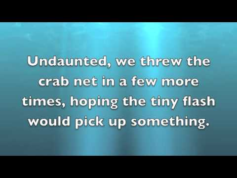 Science Experiment: Undersea Adventures