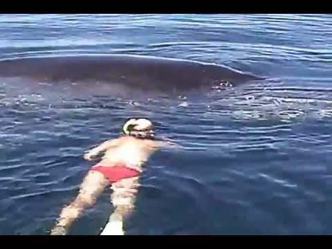 The rescue of a Humpback Whale tangled in netting