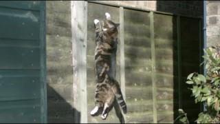 Gravity Defying Cat: The Slow Mo Guys