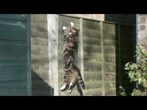 Gravity Defying Cat: The Slow Mo Guys