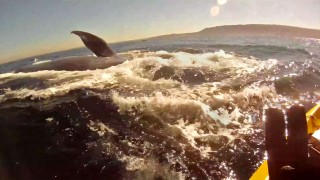 Kayaking with Redondo Beach Blue Whales