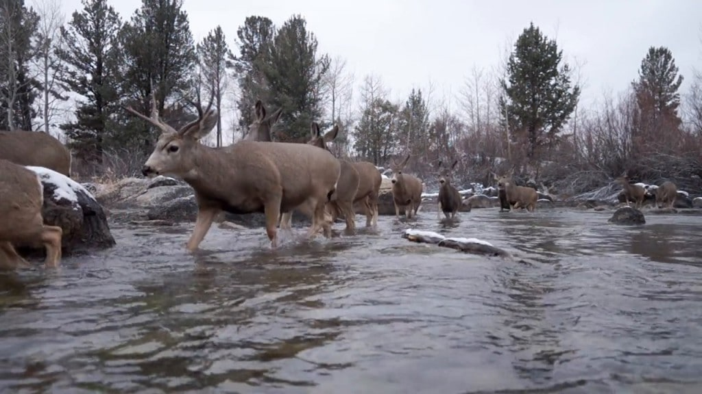 national geographic mule deer migration photo exhibit