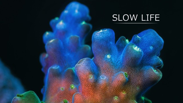 Slow Life: Incredible macro video of fluorescing corals & sponges