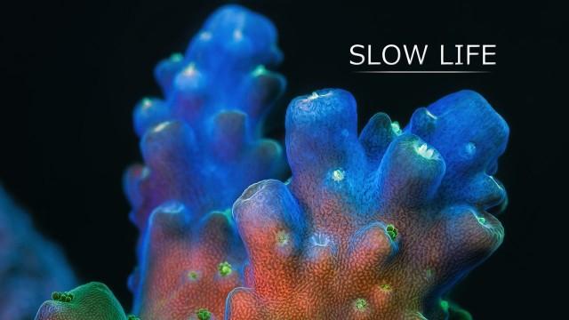 Slow Life: Incredible macro video of fluorescing corals & sponges