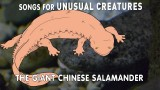 Chinese Giant Salamander – Songs for Unusual Creatures