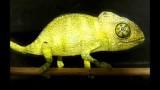 Life-like paper chameleon automata by Johan Scherft